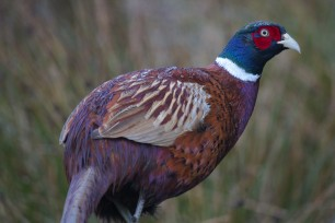 St David's Game Bird Events