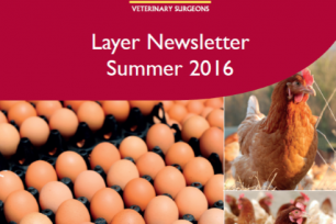 Check Out Our Latest Layer Newsletter