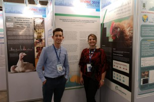 St David's and Eco Animal Health's Mycoplasma research presented this week to world professionals at the World Poultry Veterinary Association Congress in Bangkok
