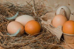 Investigating an Egg Drop