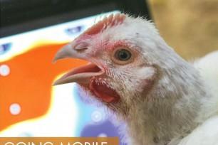 PrognostiX: Blistering internet speed allows farm to use smart technology
